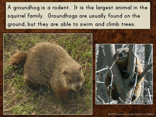 groundhog information PowerPoint
