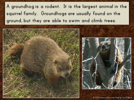 groundhog information PowerPoint