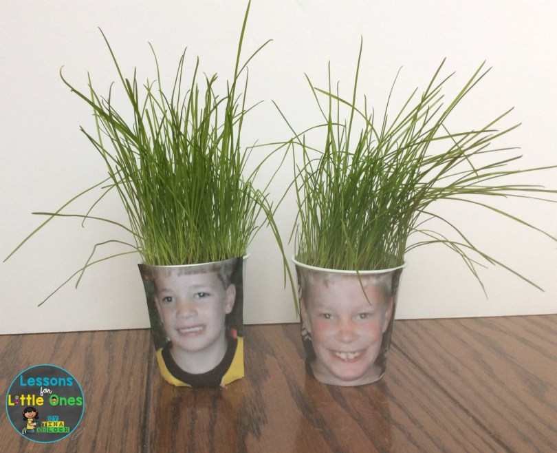growing grass with children