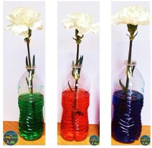 how flowers drink science experiment