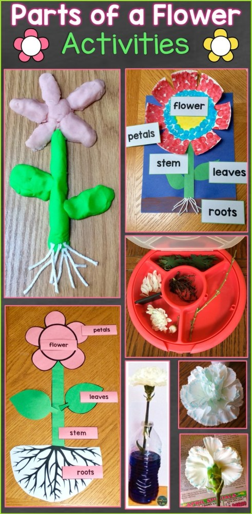 Parts of a Flower Activities