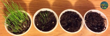 plants science experiment