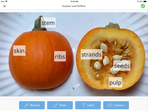 parts of a pumpkin labeling activity using Seesaw app
