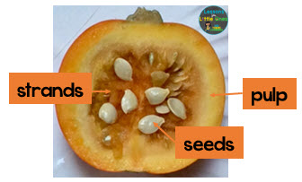 parts of a pumpkin inside