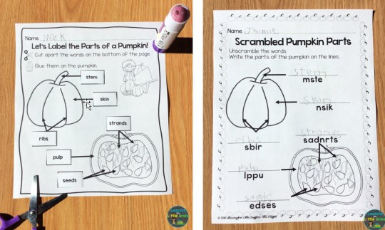 parts of a pumpkin labeling pages