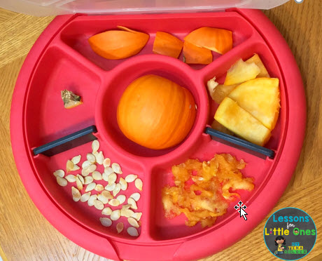 parts of a pumpkin in a sorting tray
