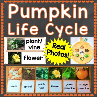pumpkin life cycle real photos