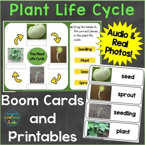 plant life cycle boom cards print photos