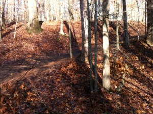 One of many trails nearby