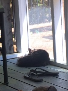 Sleeping in the sun. Where she'll always be now.