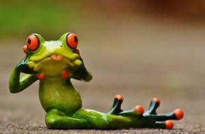 frog-1212220_1920