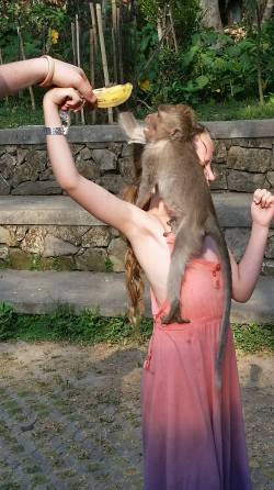 Taylor was keen to get close to the monkey's!
