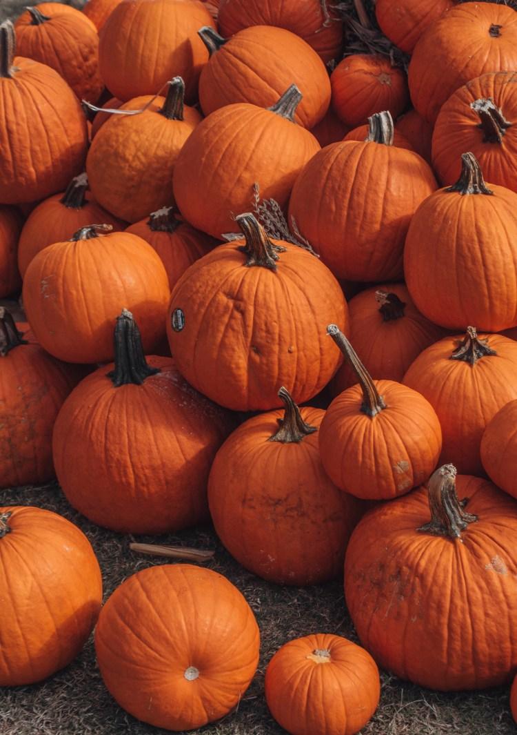 pumpkin patch-Armature Works