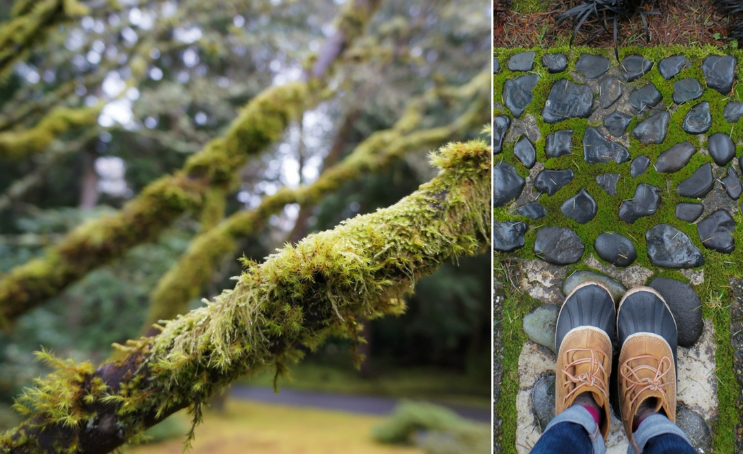 moss in bloedel reserve