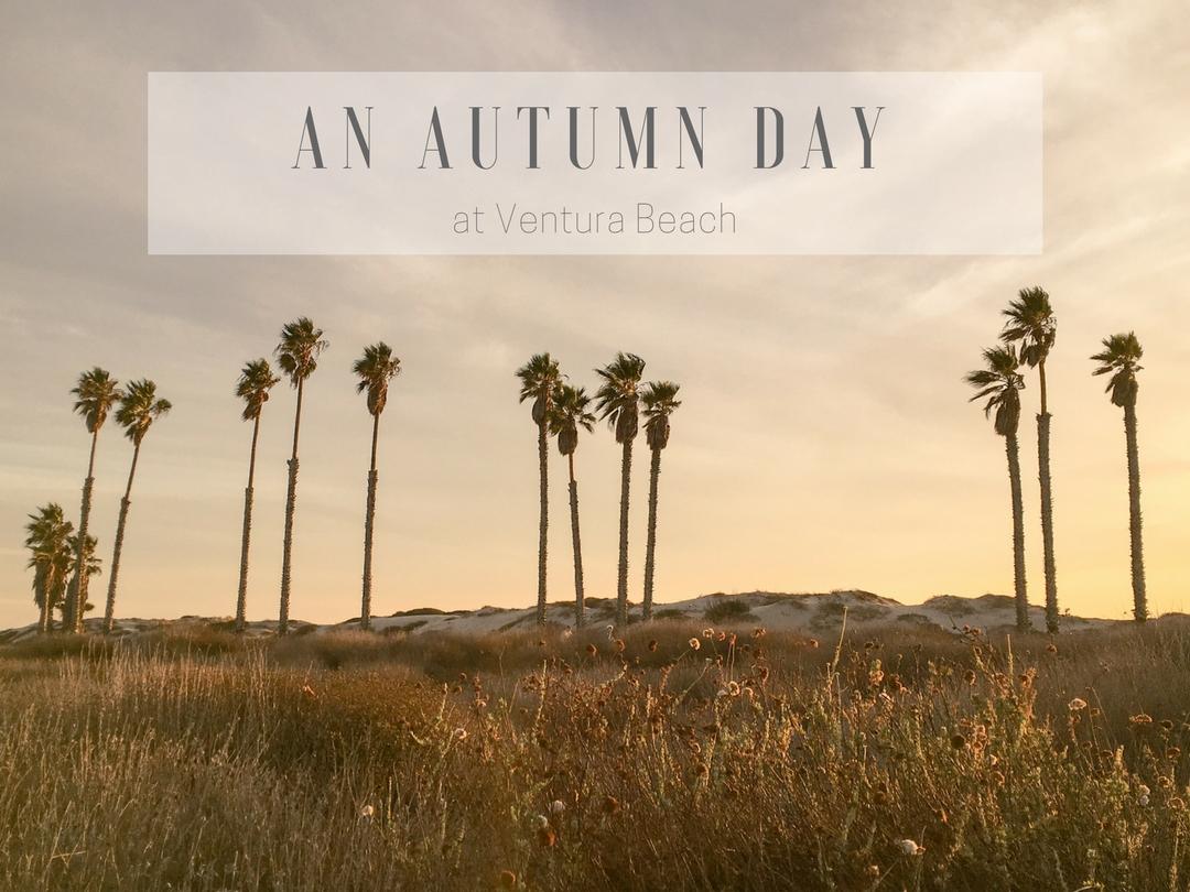 An Autumn Beach Day