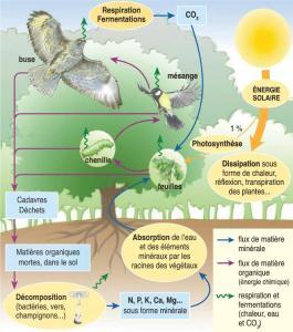 ecosystem explaination