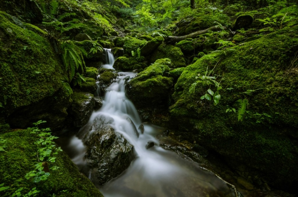 Photo of rocky stream