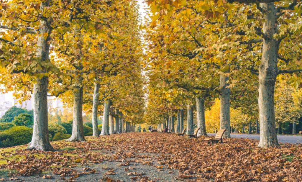 Photo of Autumn trees in Tokyo