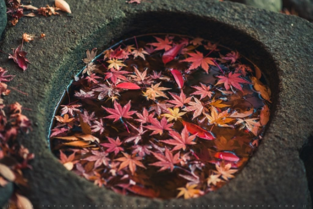 Autumn leaves in a basin