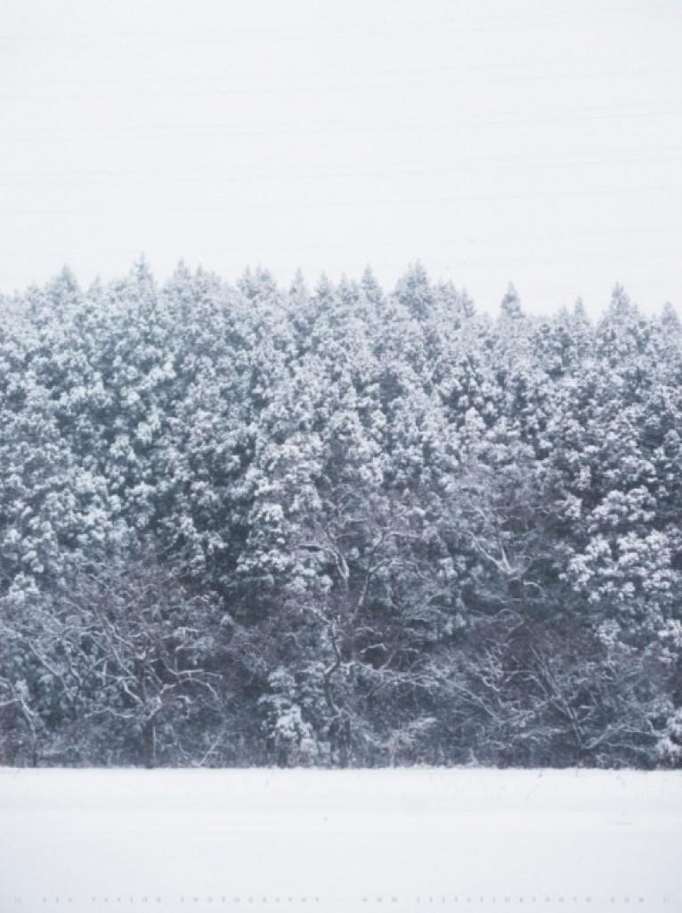 Trees In Snow Japan