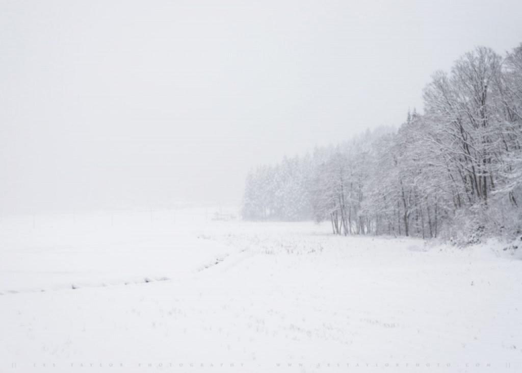Akita Snow