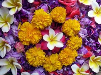 fleurs indiennes pressing robe mariage