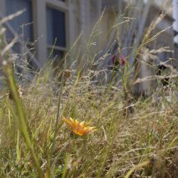 Weeds # 8