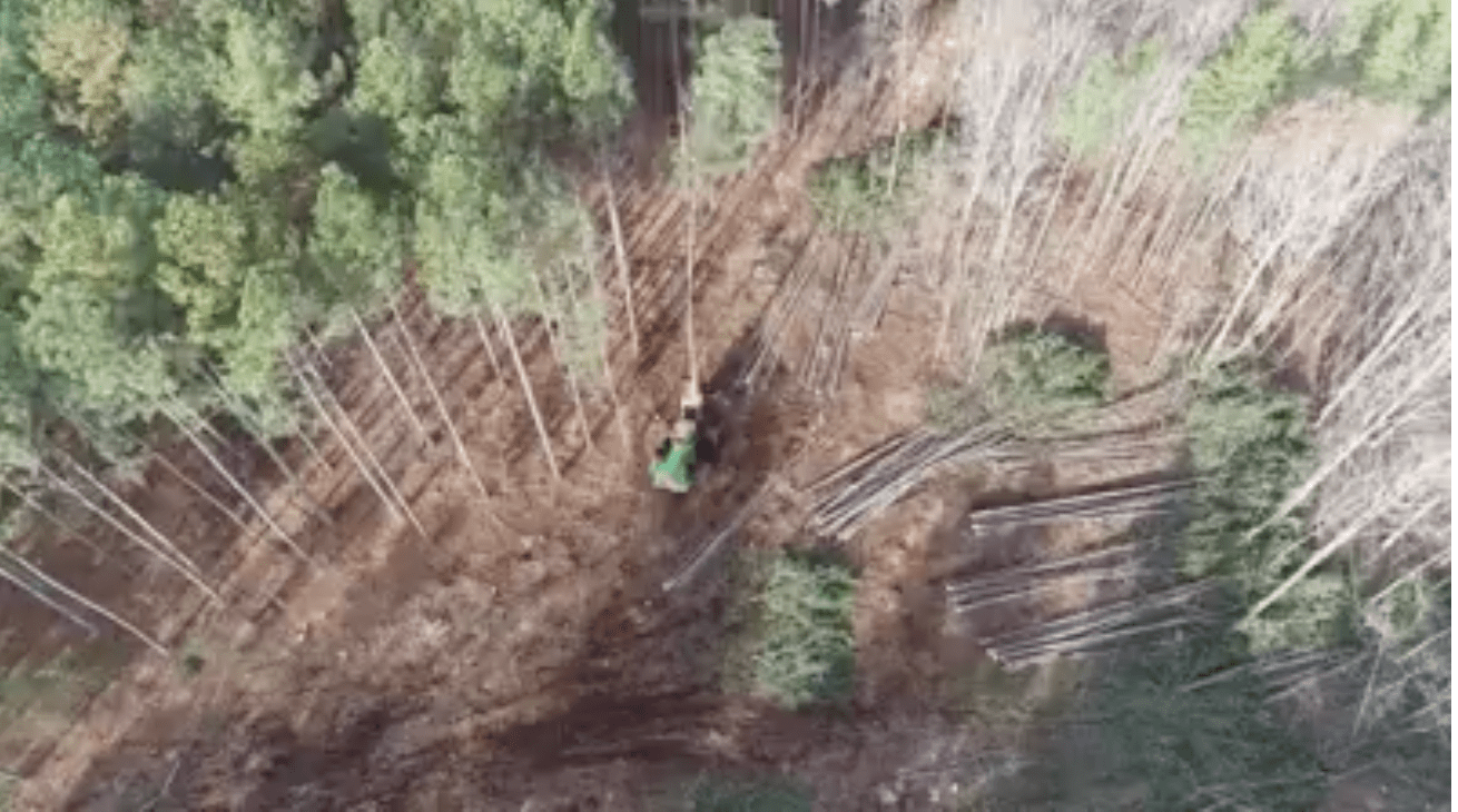 trees being cut down in a forrest