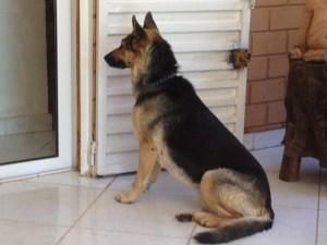 Winnie, la gardienne de la niche aux Cotons !!!!