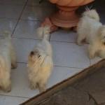 J'ai également fait la connaissance des trois drôles de Cotons, Emie, Baya et Elsy !!!