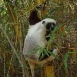 Mes humains sont allés voir des Lémuriens