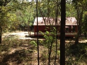 Notre niche temporaire dans la forêt