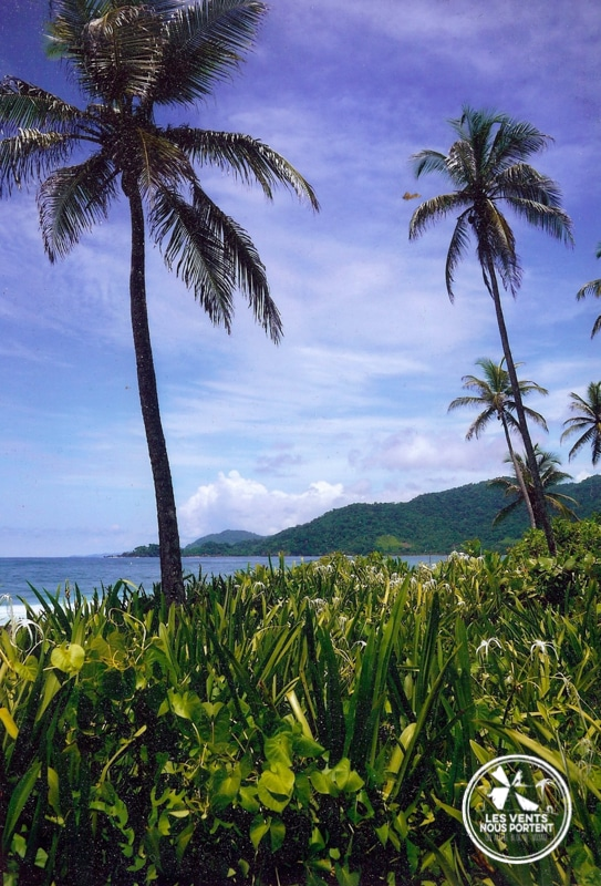 Palmiers et mer à Capurgana en Colombie