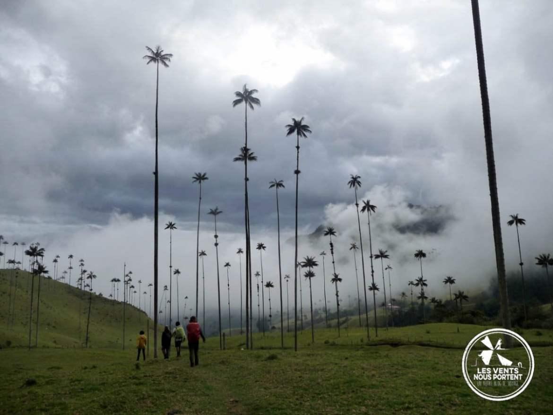 Vallee del Cocora Salento Colombia
