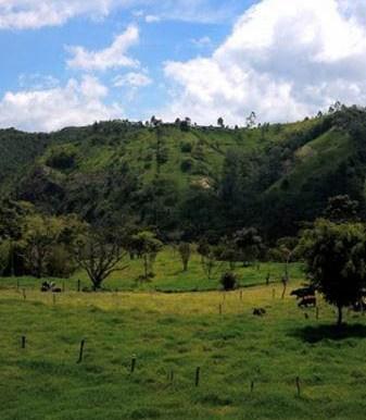 Paysage Salento Colombie