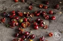 Café colombien blog de voyage en Colombie