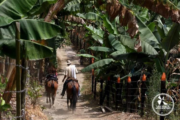 Cavaliers au coeur de la zona cafetera, Photos de Salento en Colombie