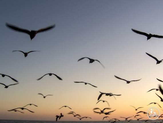 pourquoi partir blog de voyage pensées voyageuses