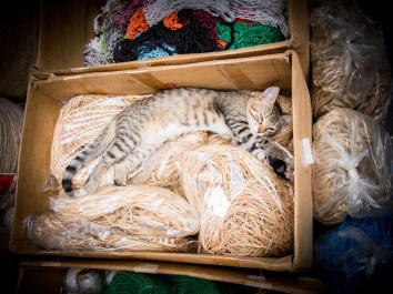 chat-carton-marche-egyptien-istanbul-voyage-turquie
