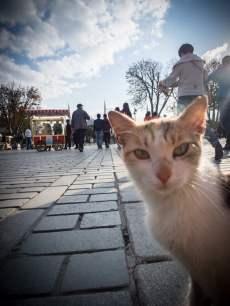 chat-sultanahmet-istanbul-voyage-turquie