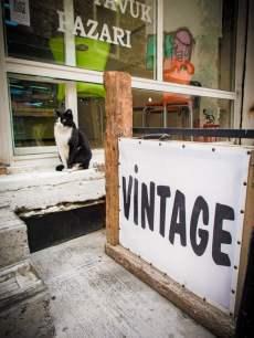 chat-vintage-voyage-istanbul-turquie
