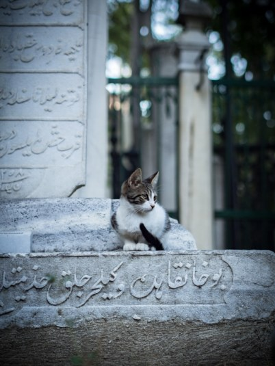 chaton-kittie-cat-cimetiere-soufi-istanbul