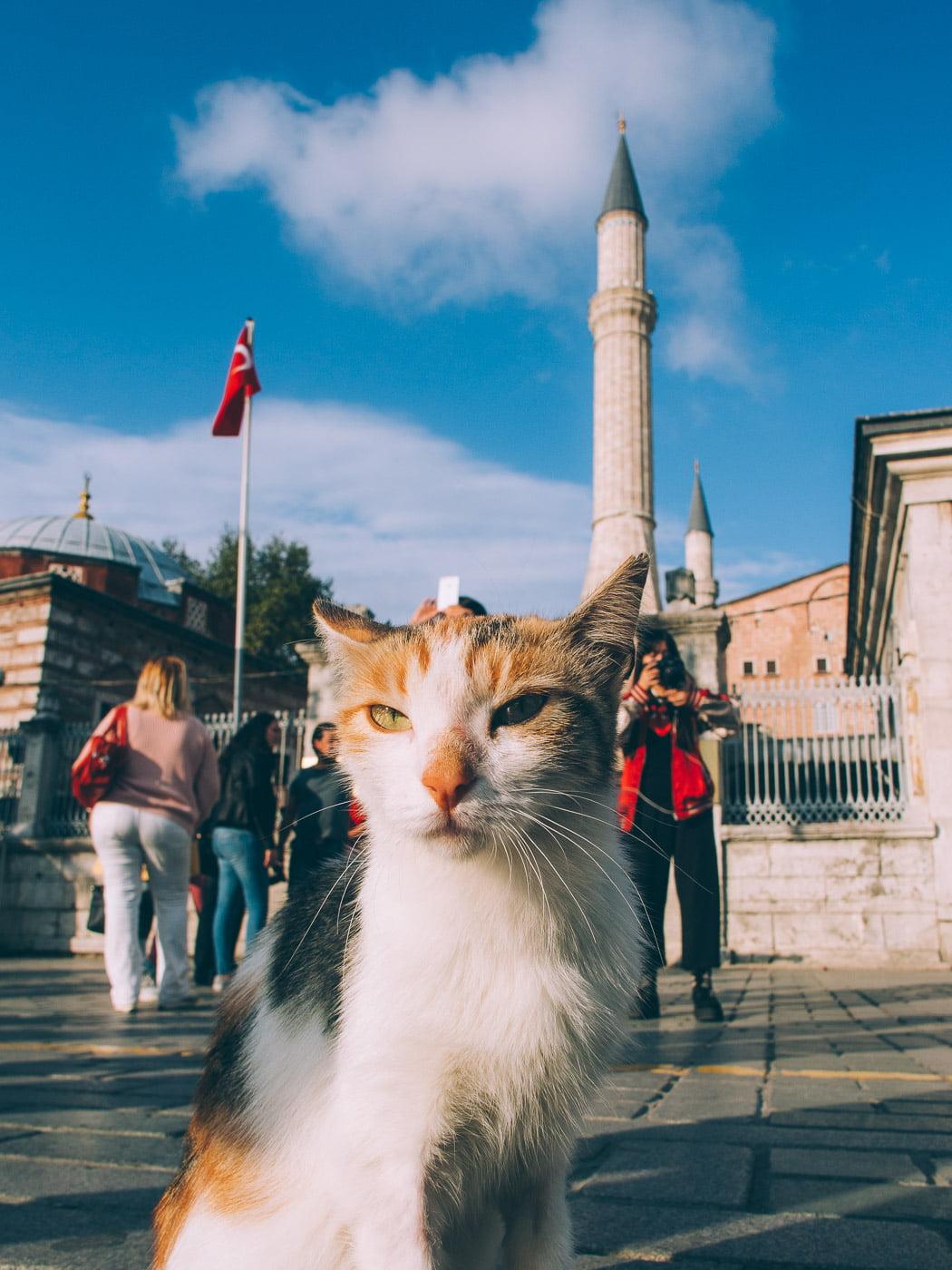 Istanbul, la ville des chats