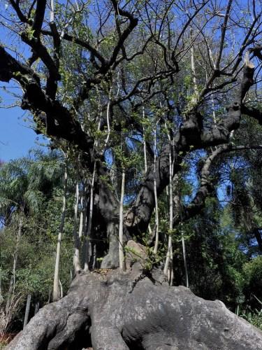 arbre-botanico