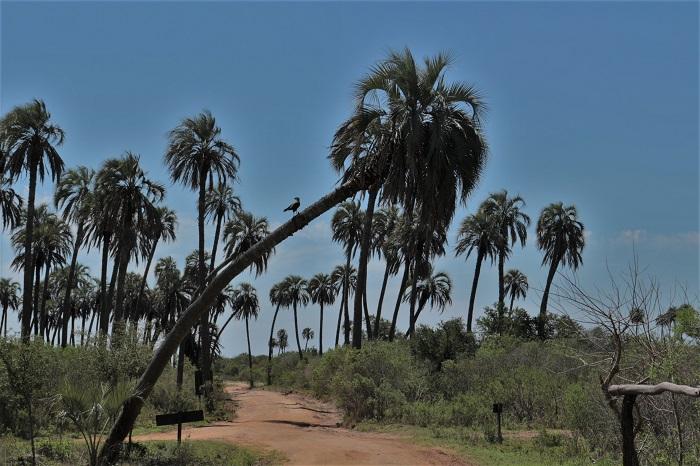89-palmier