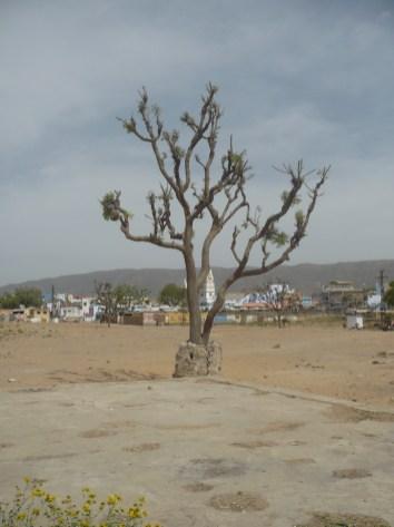 Pushkar (20)