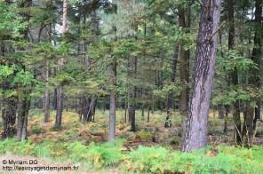 Le reste des arbres et bien... ressemblent à des arbres