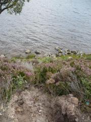 Loch Muick, le 30 aout 2008 (72)