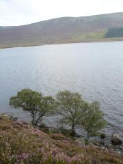Loch Muick, le 30 aout 2008 (74)
