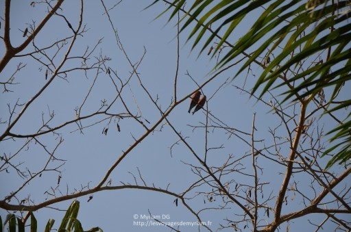 De bien jolis oiseaux
